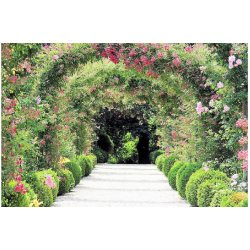 Home affaire Fototapete »Rose Arch Garden«